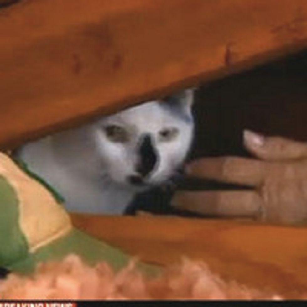 Cat Found In Tornado Destroyed Home