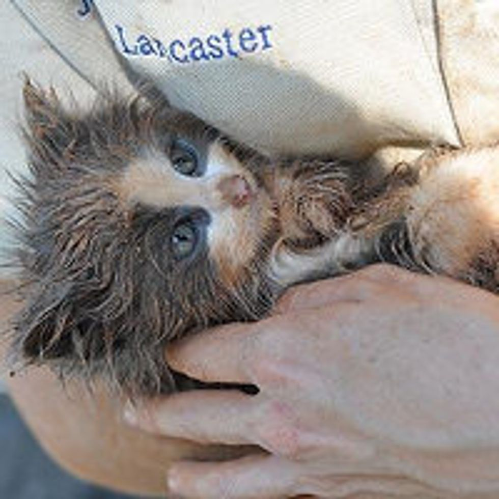 Tiny Feral Kitten Saved From Hole At Construction Site