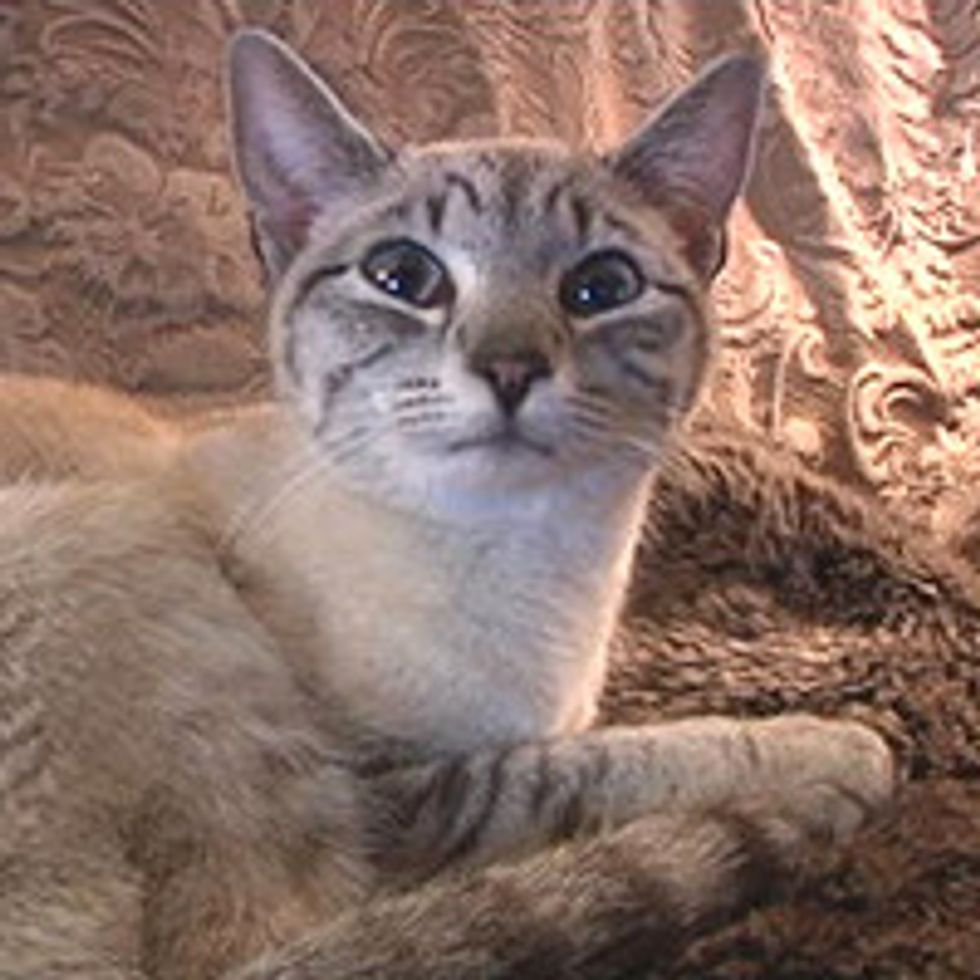 Missing Siamese Cat Saved From 25-foot Hole By Yakima Firefighters