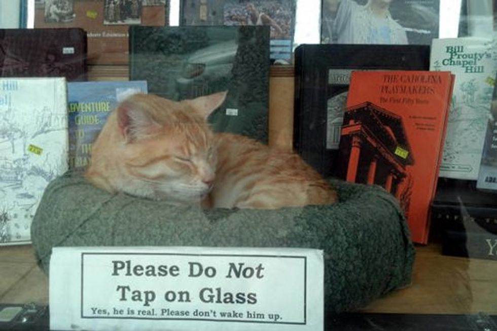 Red and Elmo The Bookshop Cats