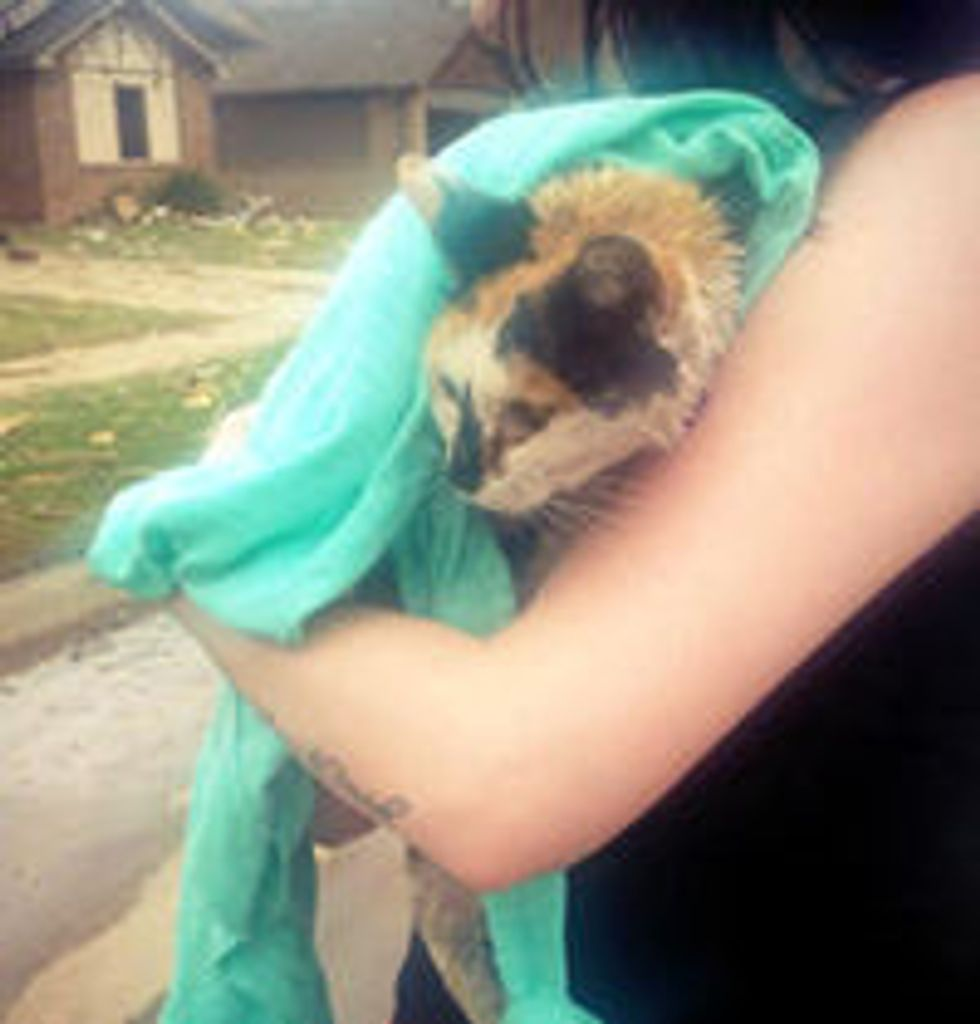 Calico Cat Survives Tornado Rescued By Kind People