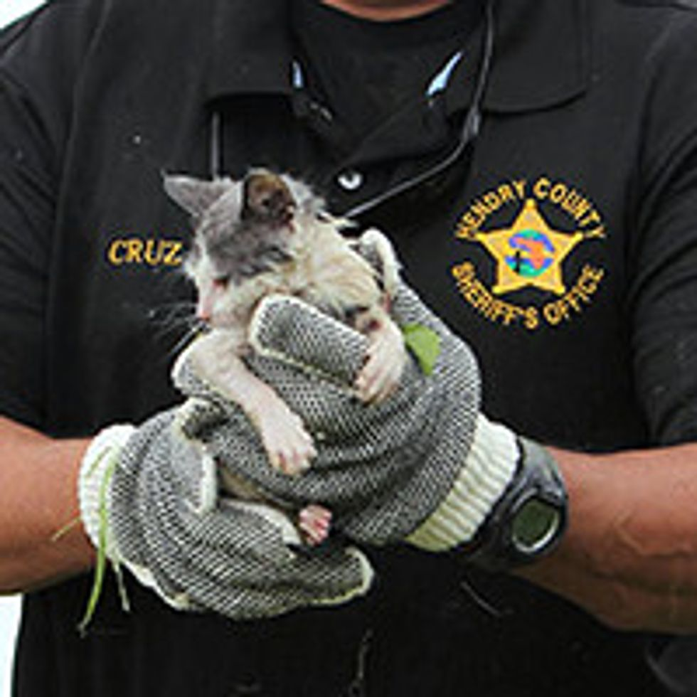 Deputies Rescue Kitten That Fell In River