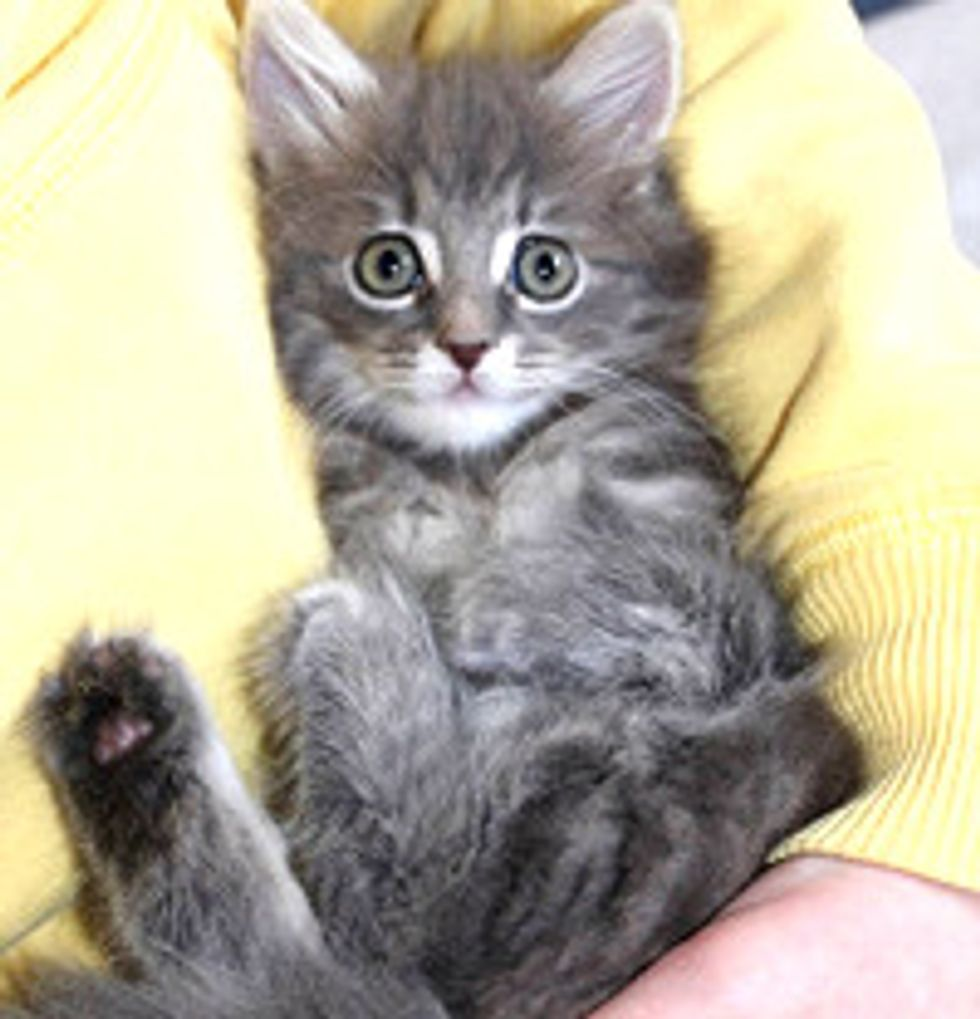 Squitten The Kitten! Born With No Bones In Front Paws, Walks & Sits Like A Squirrel