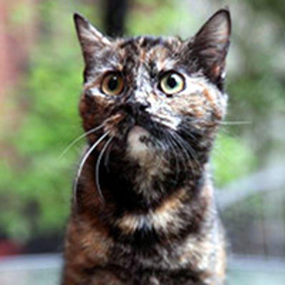 Cat Saved By Support Through Social Media Now Ready To Start New Life