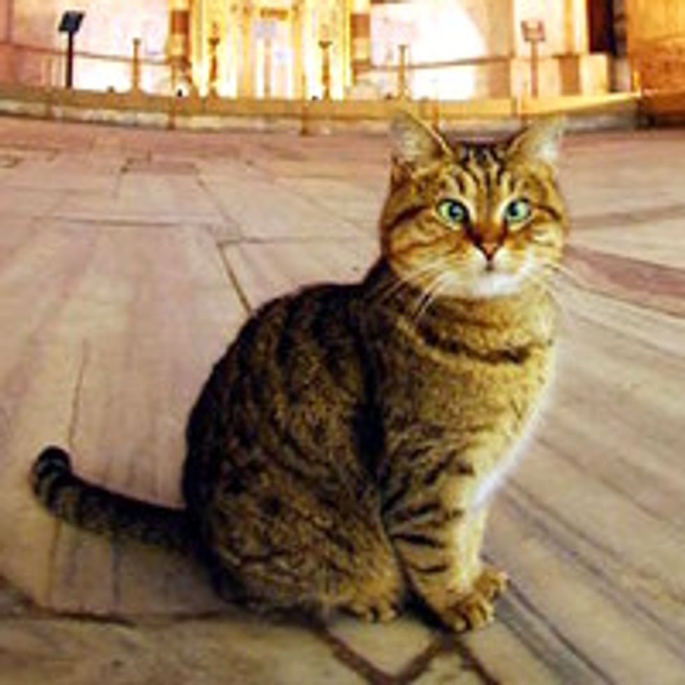 Loyal Cat Lives At The Hagia Sophia In Istanbul