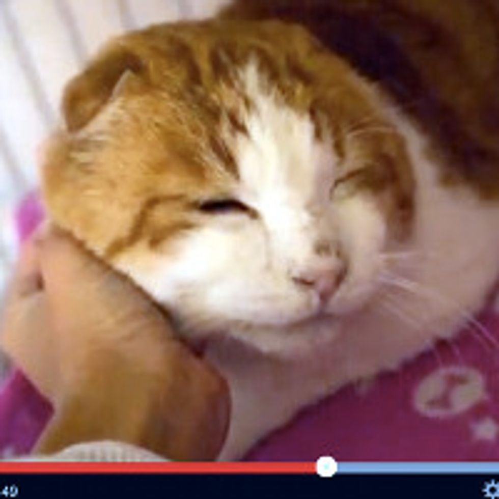 Homeless Cat Found By Convenience Store Finds Love - Heart-warming Story!