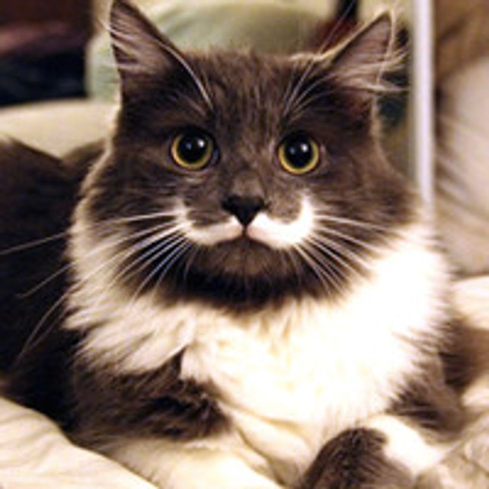 Mustache Cat Couldn't Find Home Until Someone Saw Something In Him Other Didn't