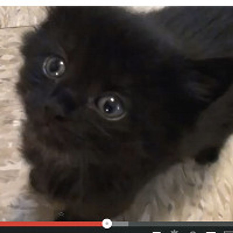 10 Reasons to Adopt a Black Cat!