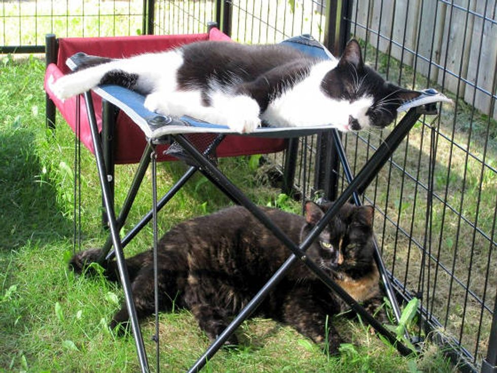 Woman Builds Cat Patio For Her Special Needs Cats While She Quits Smoking
