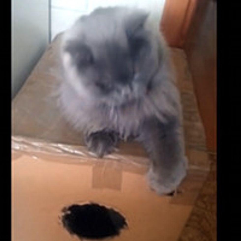 Kitty Guards His Box