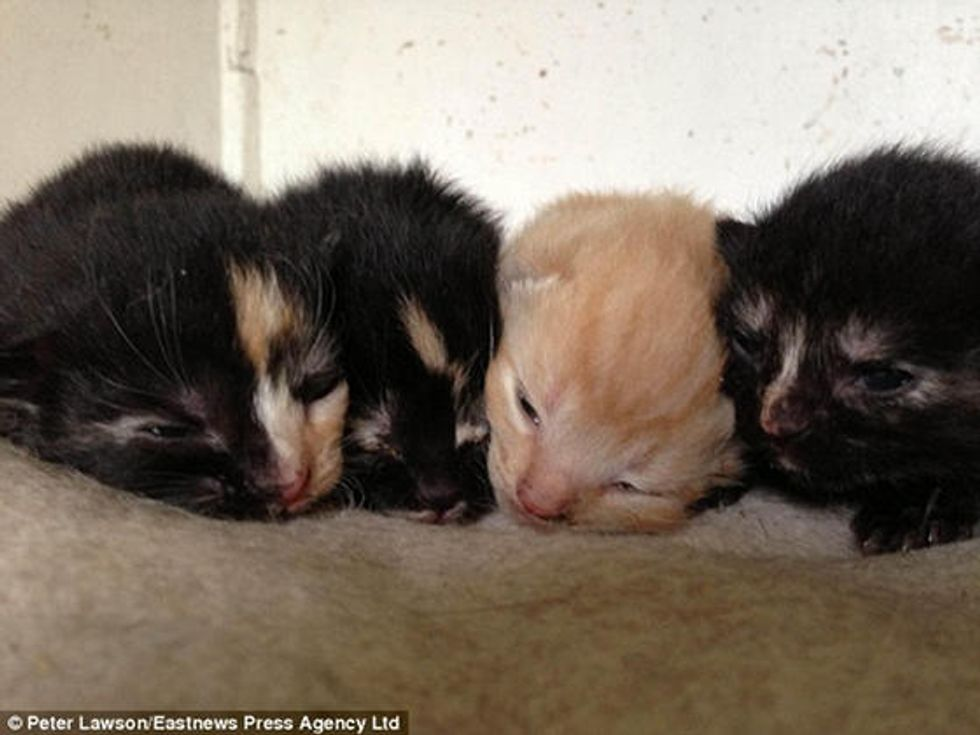 Four Newborn Kittens Saved From Trapped Inside Walls