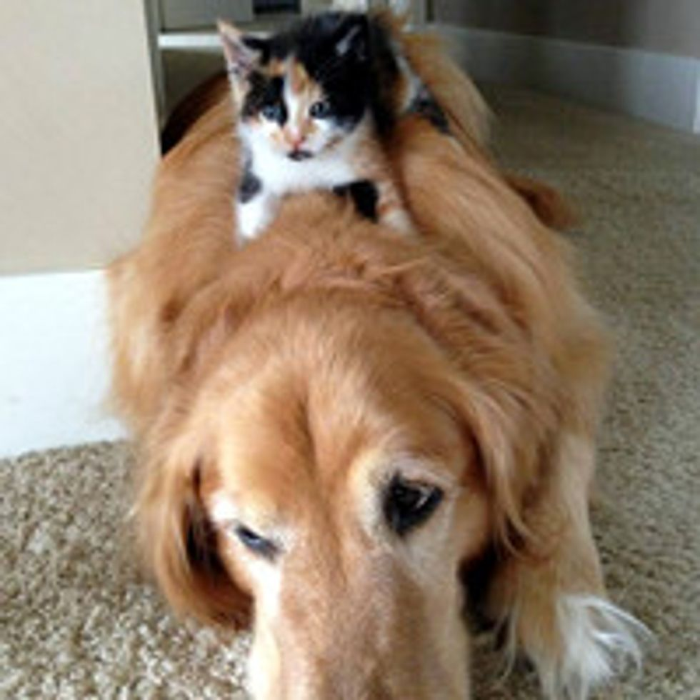 Kitten And Her Momma Dog