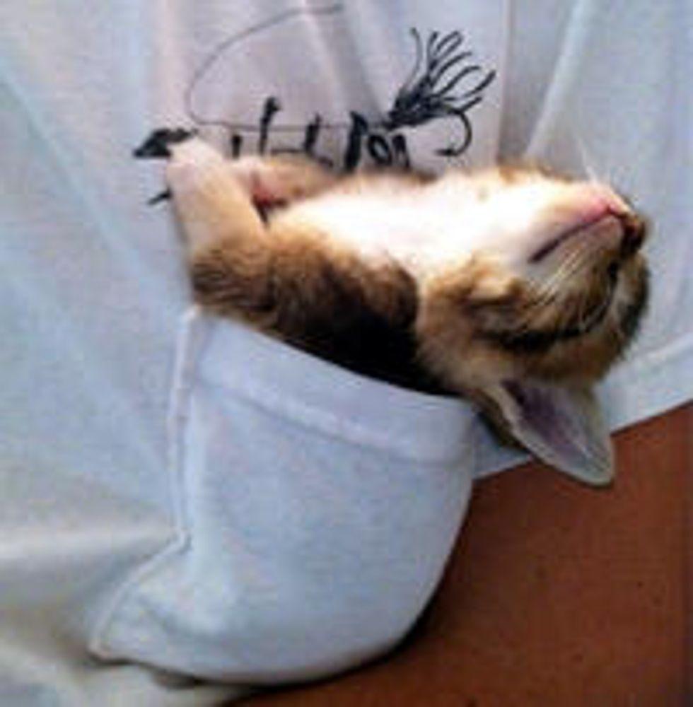 Tiny Pocket Kitten