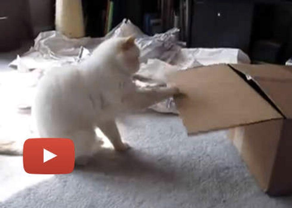 Cat Loves Touching Stuff