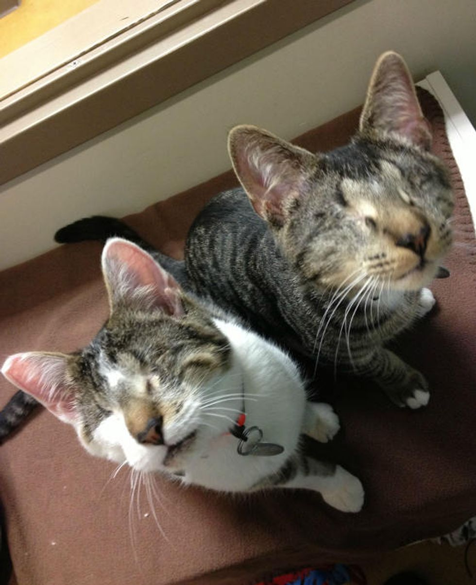 Bacon and Eggs, Two Blind Cats, Find Home Together