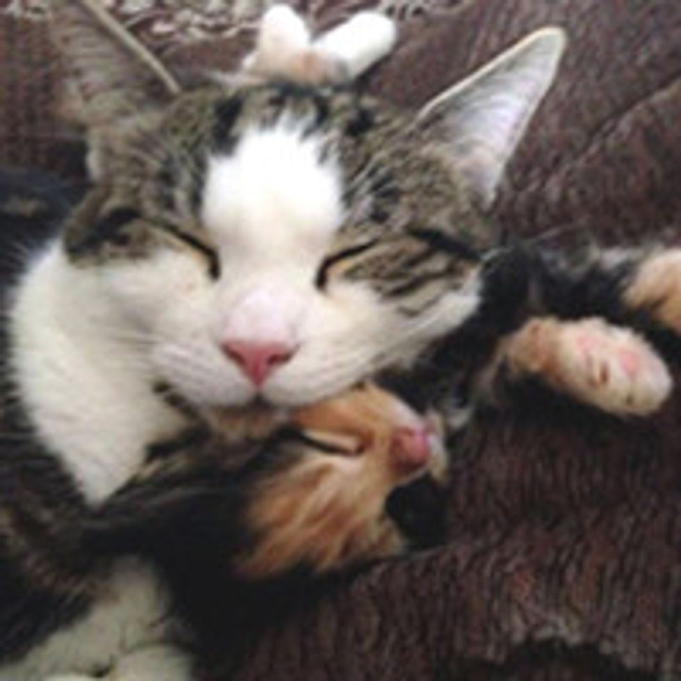 They Worried Their Older Cat Wouldn't Accept The New Kitten...