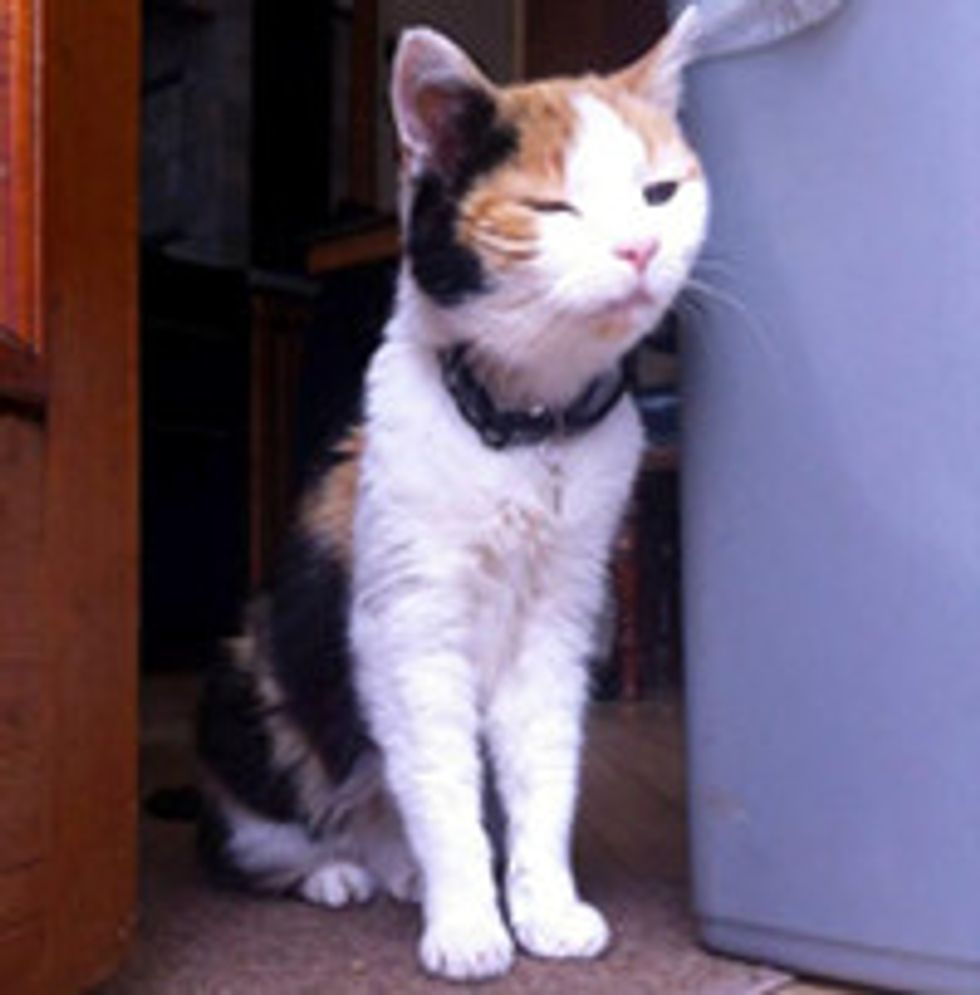 Bella 16 Year-Old Senior Cat Gets Adopted