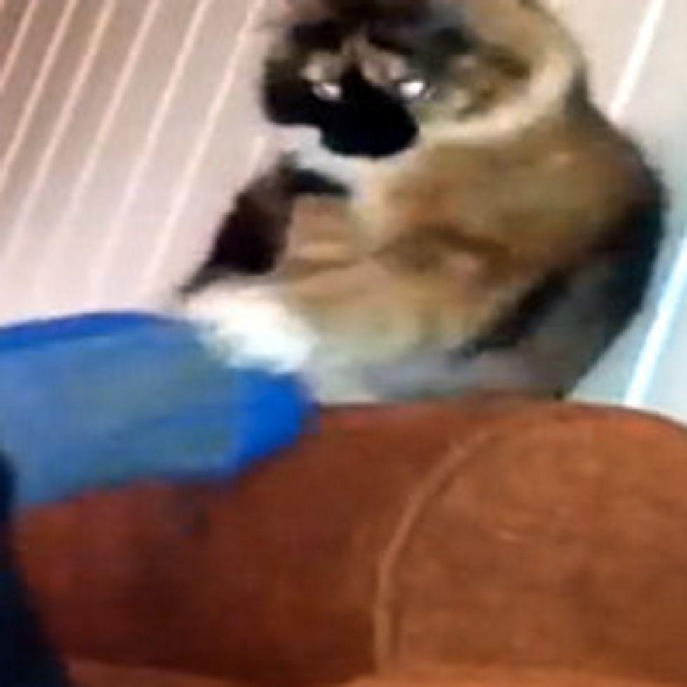 Kitty Grabbing Foot