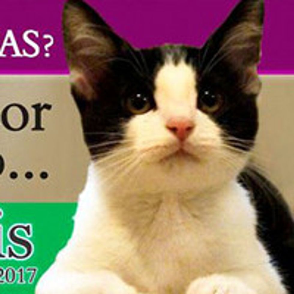 Morris The Cat, Runs For Mayor In Mexico