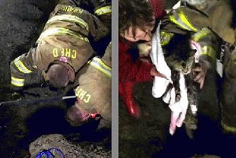 Three Hour Rescue: Cat Trapped Underground Saved By Firefighters
