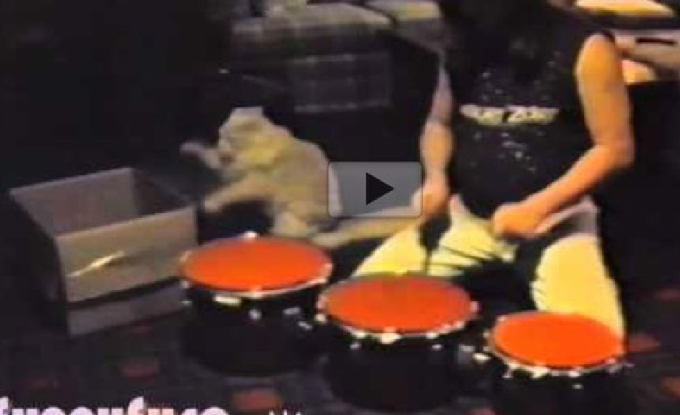 Cat Percussionist Plays 'Drum' with His Human