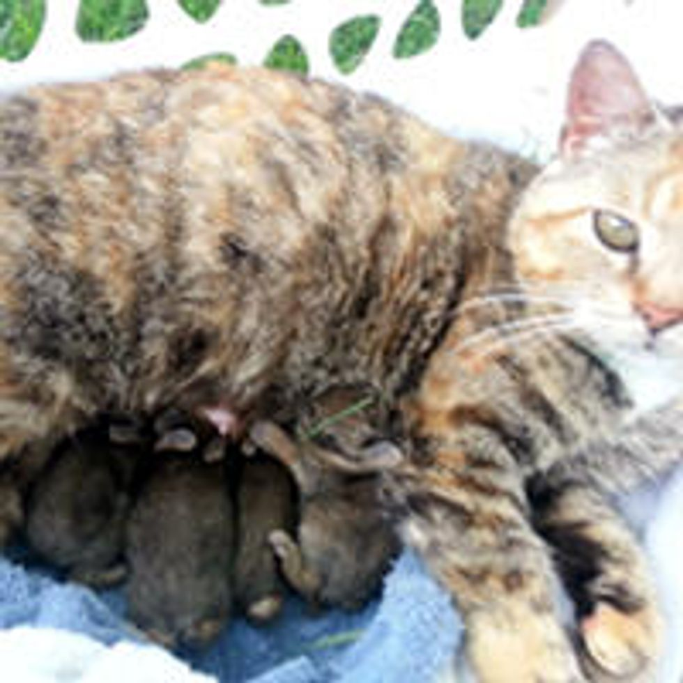 Cat Adopts A Litter Of Baby Rabbits