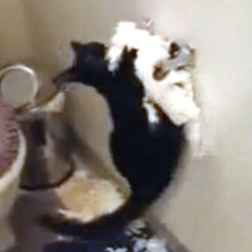 Cat Totals Toilet Paper