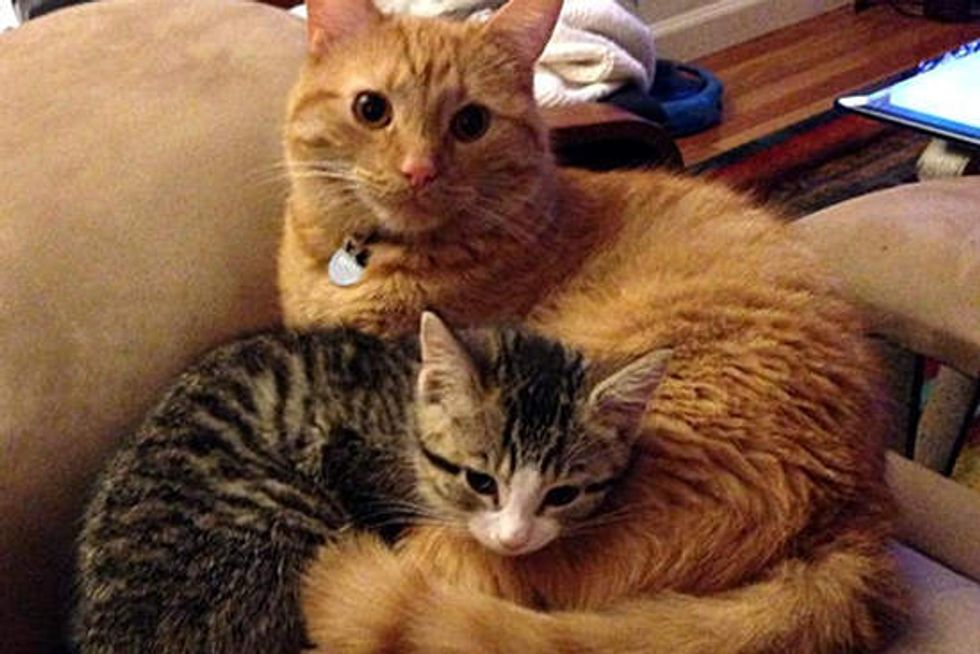 Miracle Kitten Finds New Protective Brother