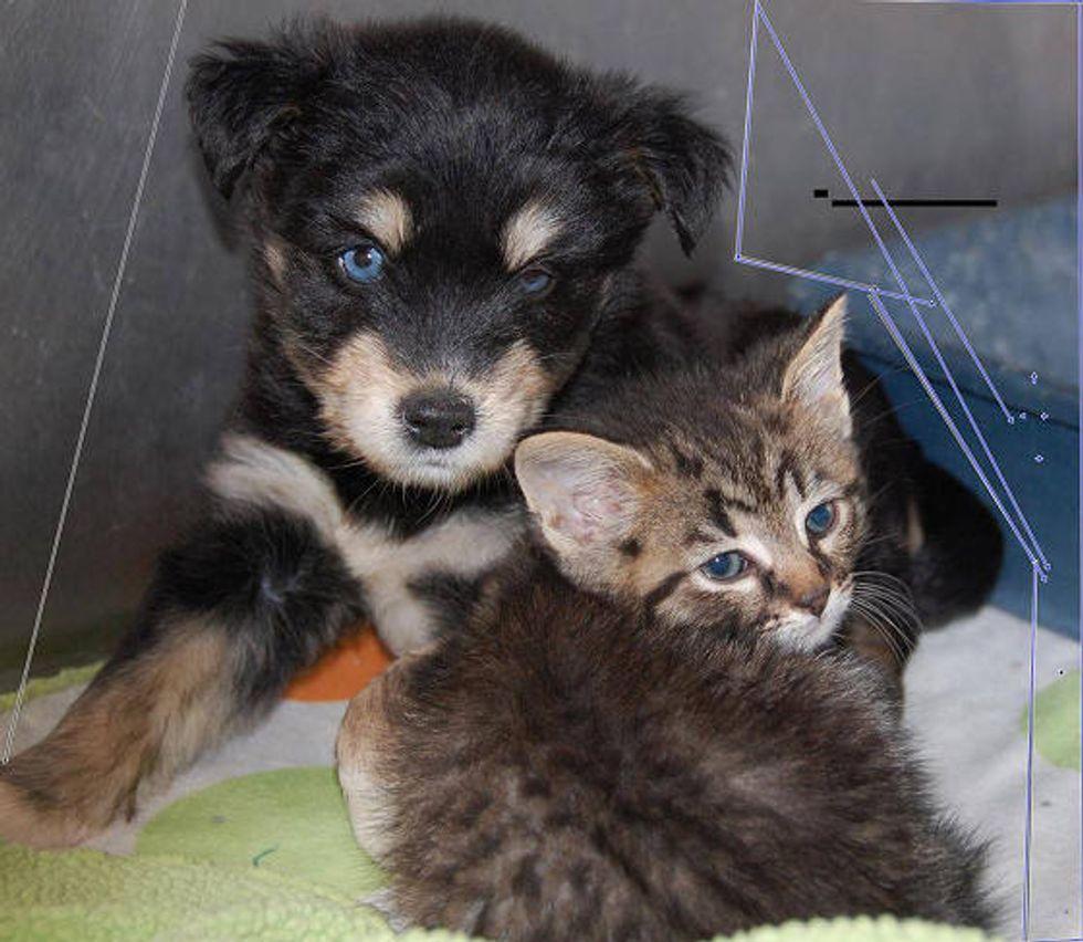 Stray Pup Finds Stray Kitten: Best Friends