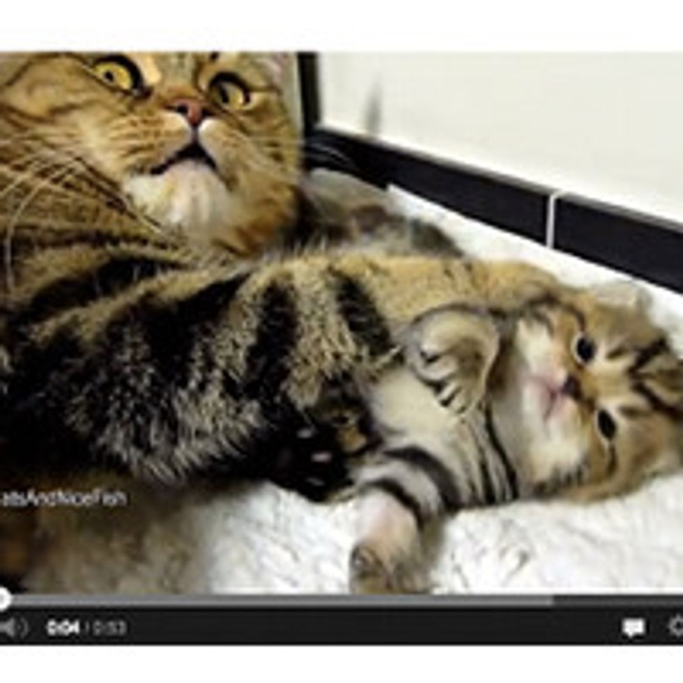 Mom Cat Talks To Her Kittens