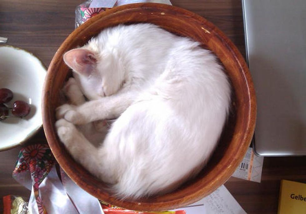 Kitty's Process Of Growth In A Bowl