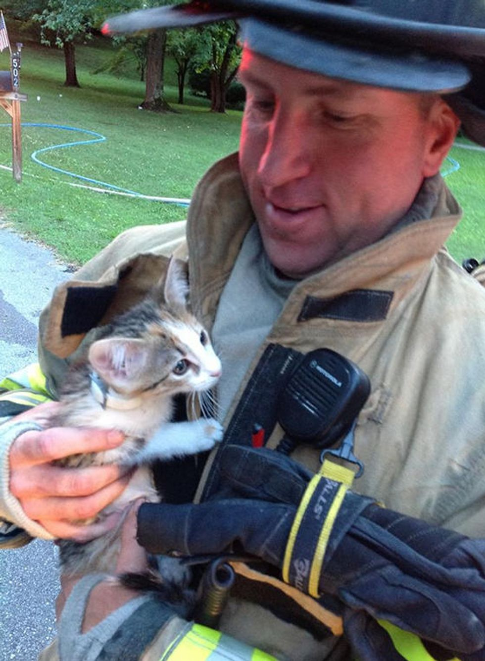 Madison Firefighters Save A Cat And A Kitten From House Fire