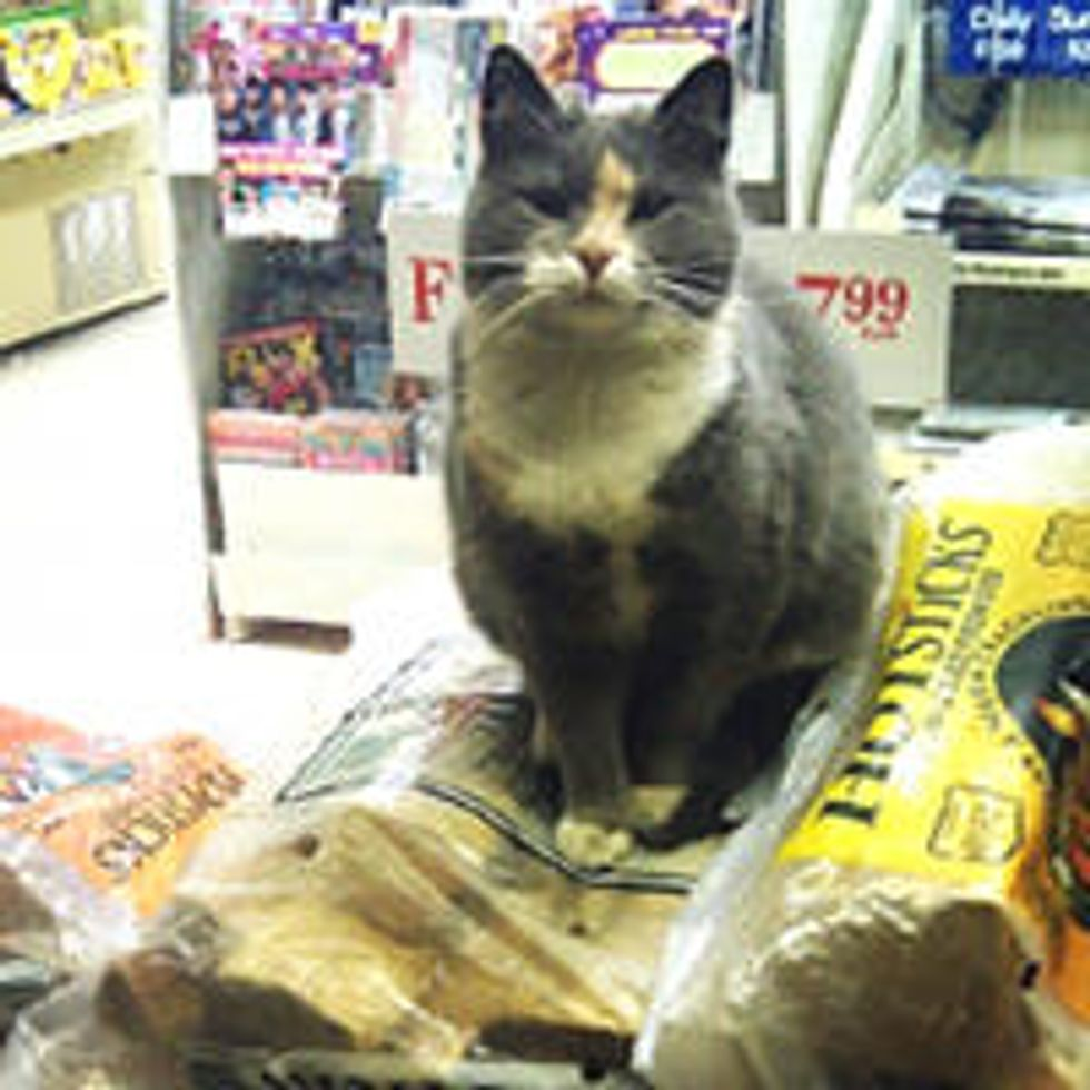 Stray Cat Finds Gas Station As Home