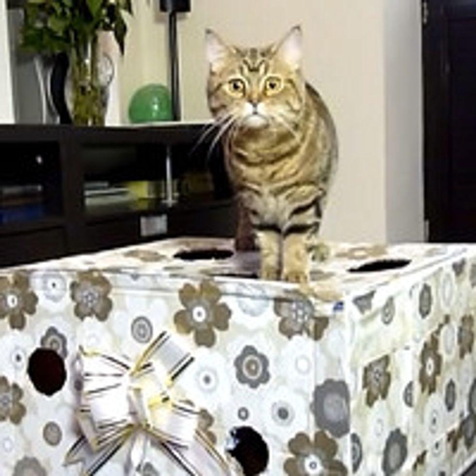 Kitties Diving In Gift Box