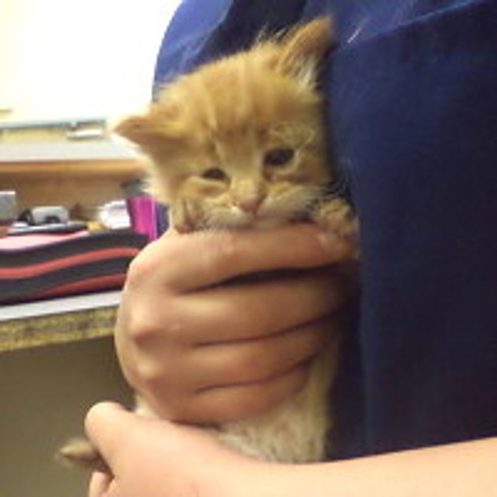 Tiny Ginger Stray Rescued, But Waits For Forever Home