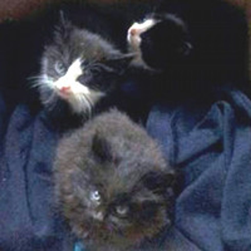 Three Lucky Kittens Saved By Landfill Workers