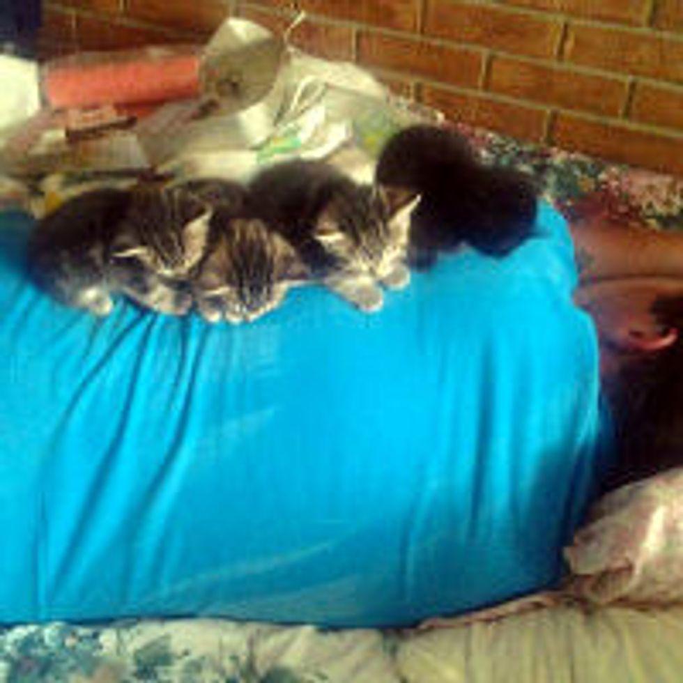 Kittens' New 'Momma'
