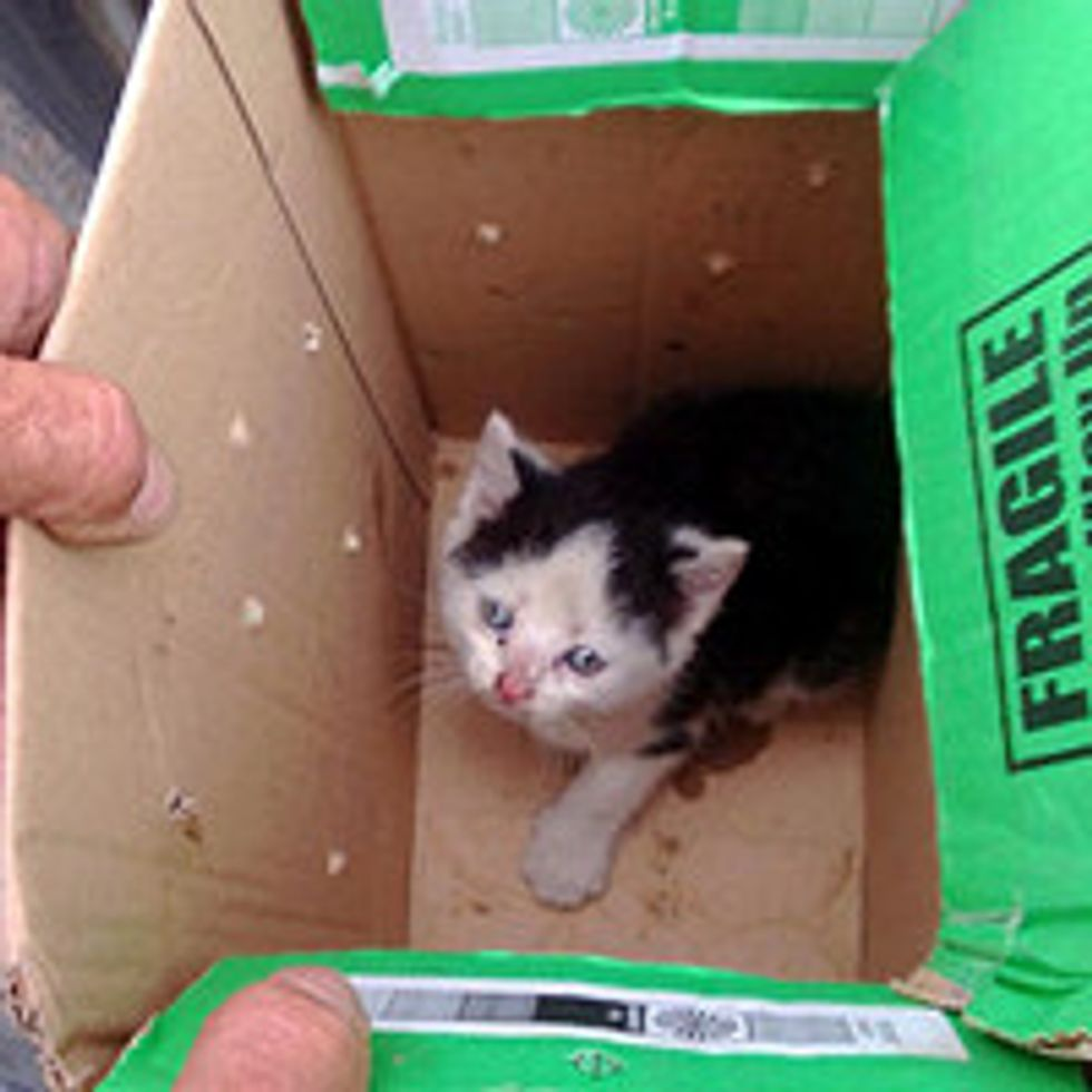 Dash The Kitten Rescued From Dashboard Of Van