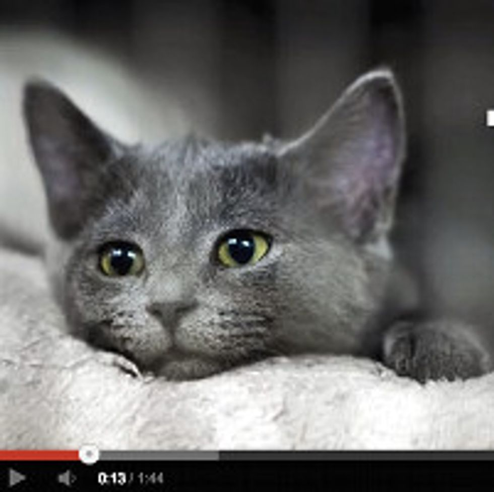 12 Reasons Why Cat People Are Crazy Awesome