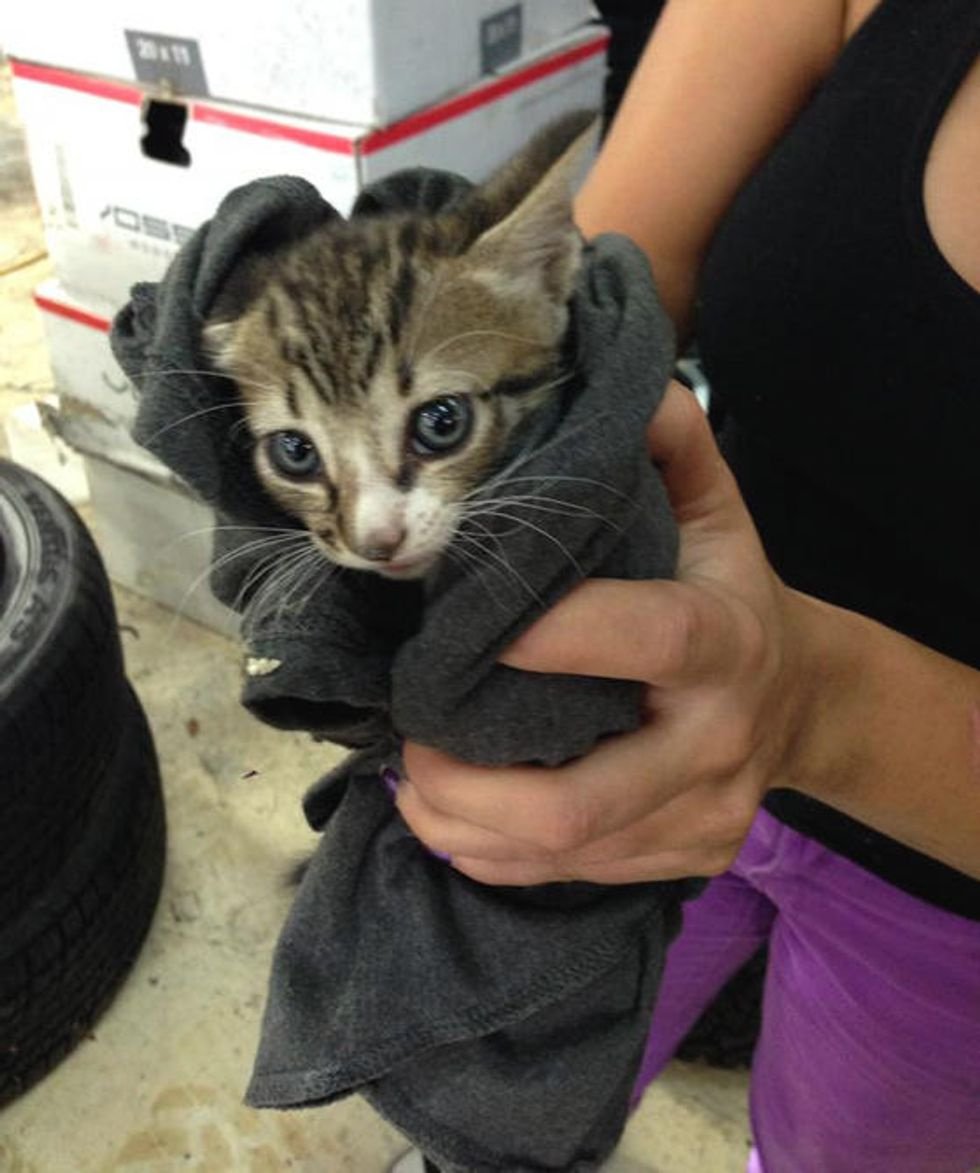 Tiny Kitten Strays Into Shop, Found Under Stack Of Tires