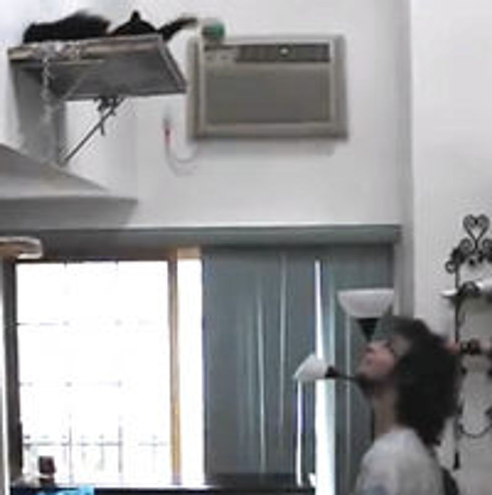 Cat Juggles With Human
