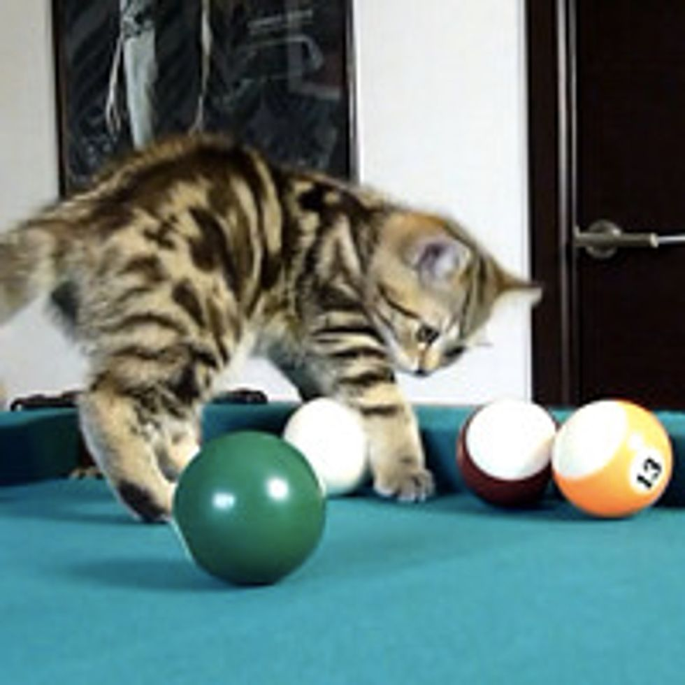 Kittens Learn To Play Pool