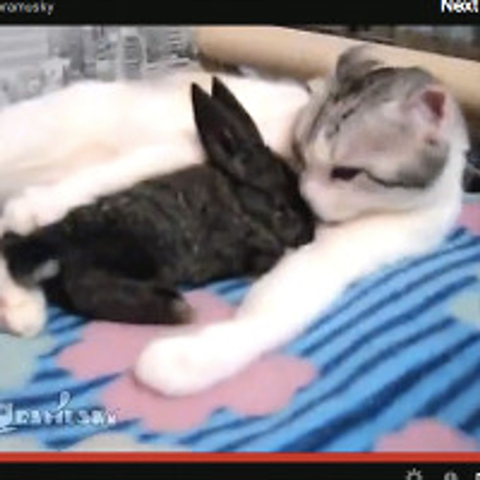 Cat And Bunny: It's Bath Time!