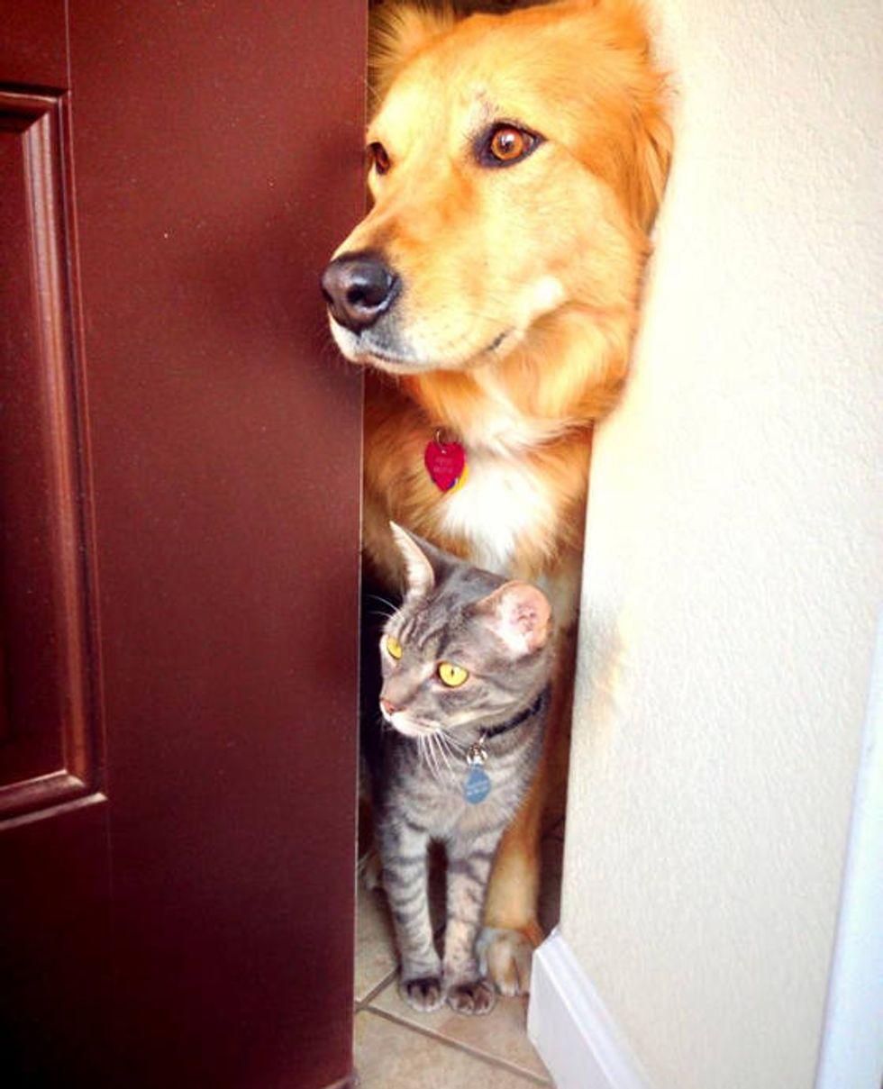 Feral Kitten Bonds With Dog: Inseparable Friends