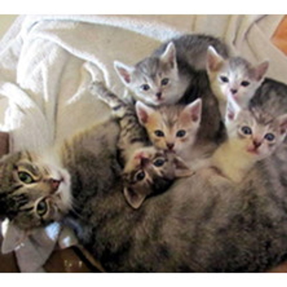 Cat Brings Surprise of Five Little Ones