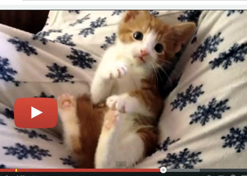 Oscar The Kitten: Cute 'splosion!