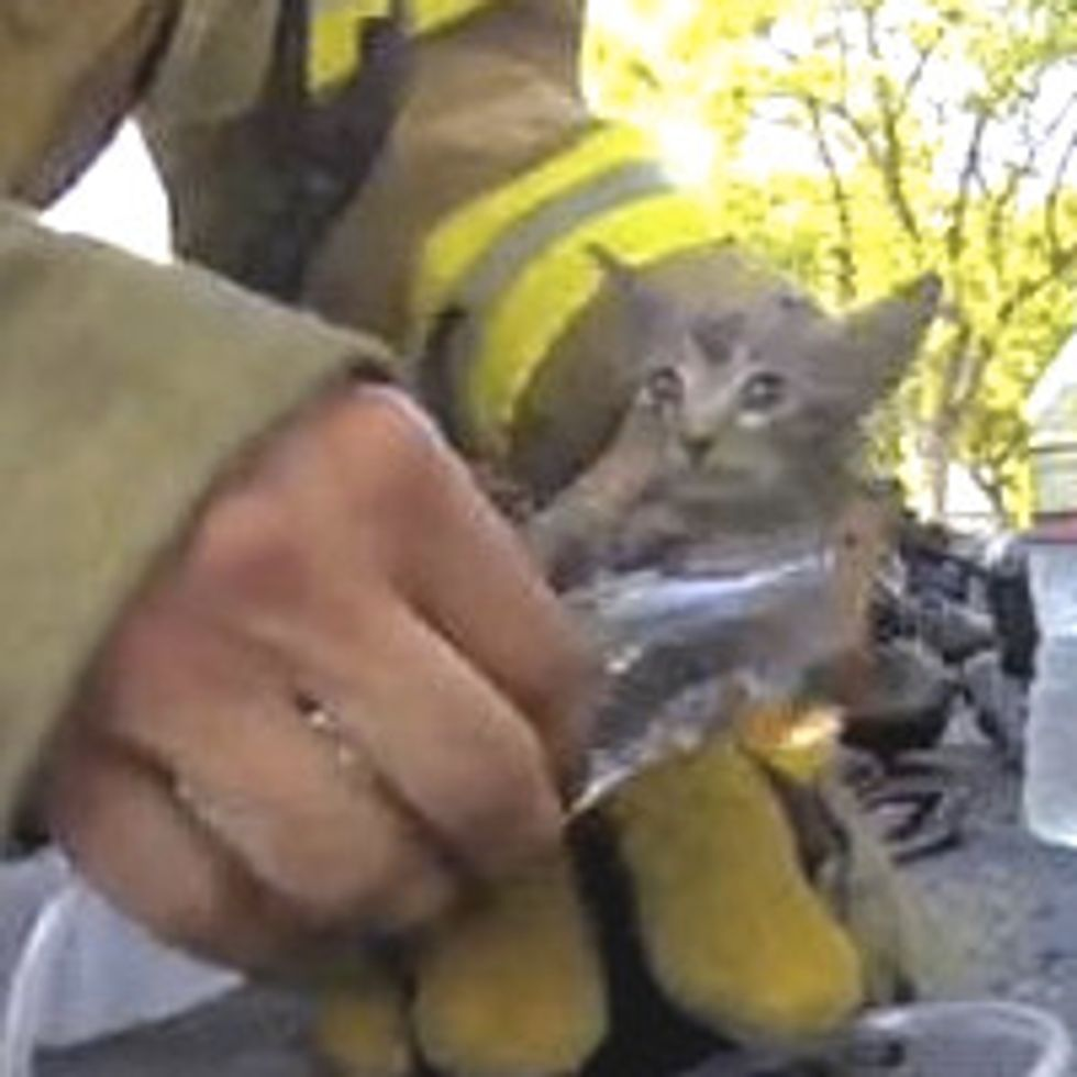Firefighter Rescues Tiny Kitten From Burning House [Rescue Video]