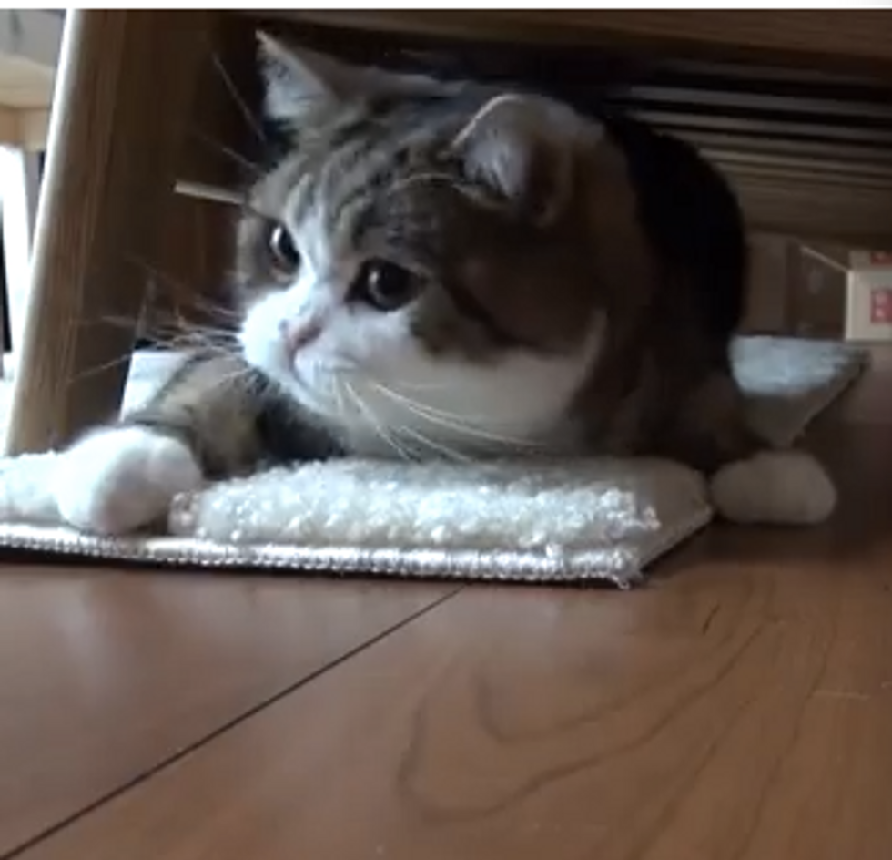 Maru Plays Under The Couch