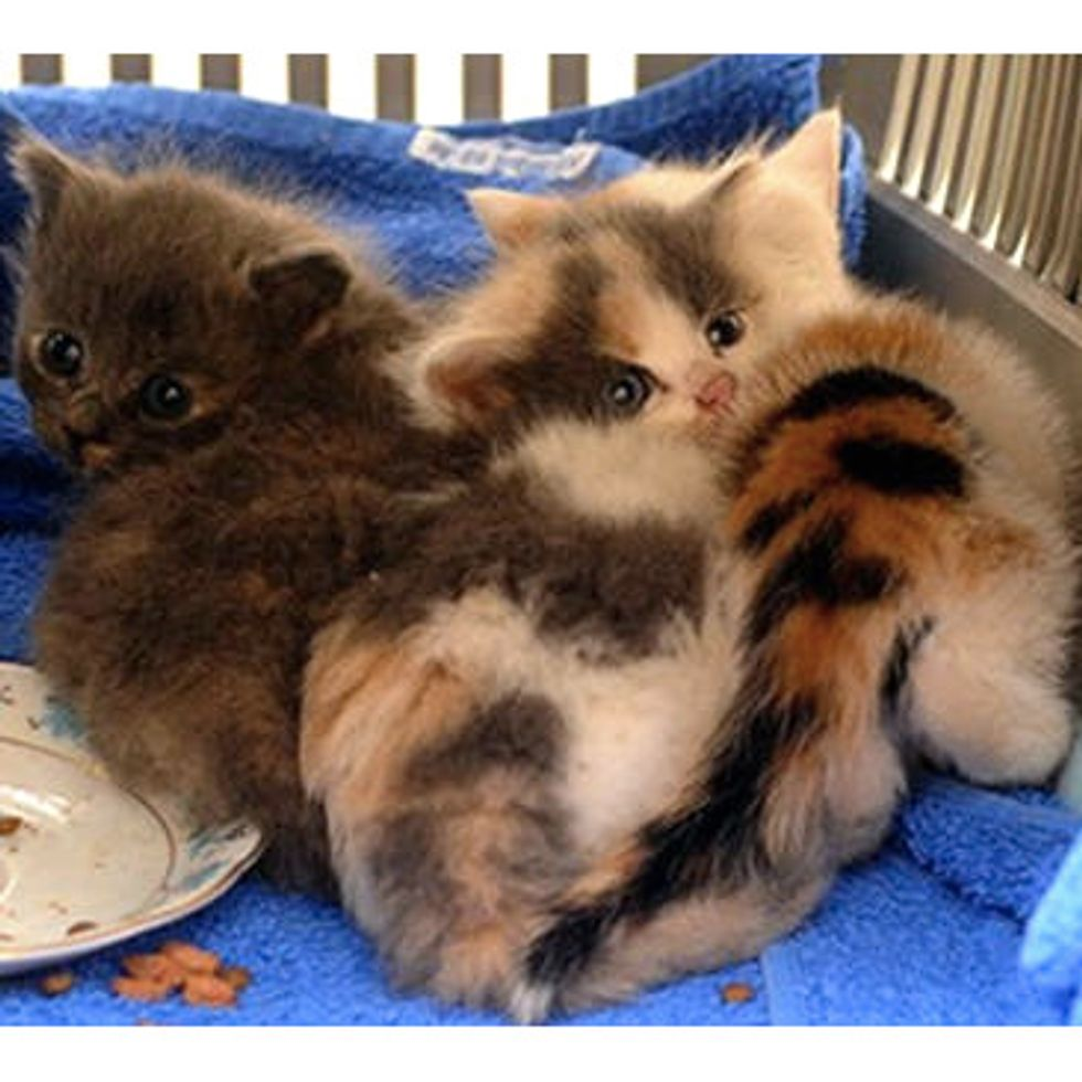 Three Kittens Found On Railway Tracks Saved By Courageous Woman
