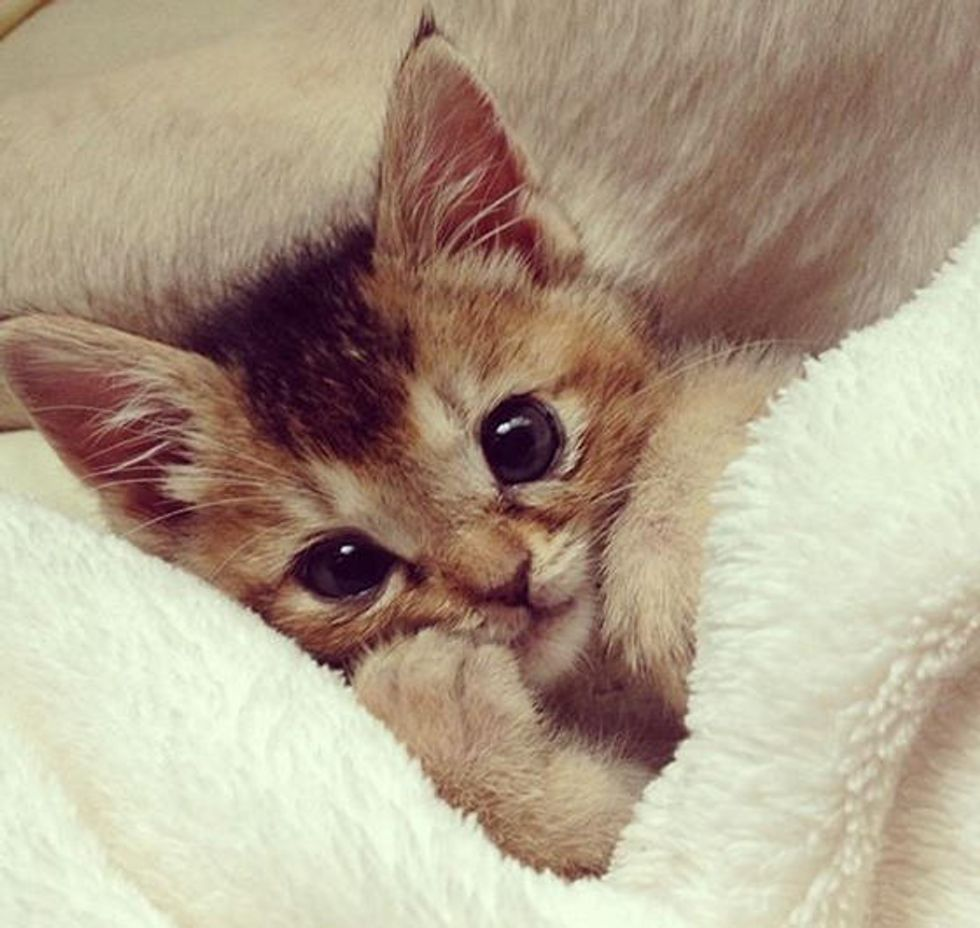 Tiny Rescue Kitten Made Amazing Recovery